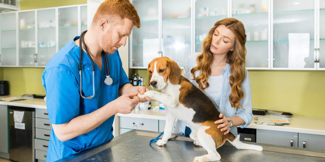 contabilidade para clínicas veterinárias